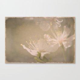 Fading Blossoms Canvas Print