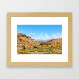Lamas in Bolivia Framed Art Print