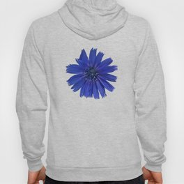 Still life with chicory flower Hoody