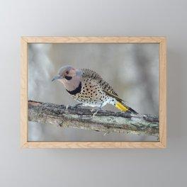 Fabulous Flicker Woodpecker Framed Mini Art Print