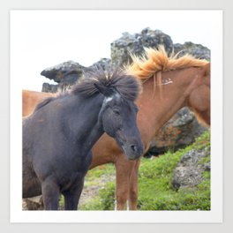 Watercolor Horse 04, Icelandic Pony, Outside Lake Mývatn, Iceland, Staring into the Wind Art Print
