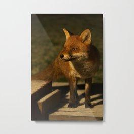 The Wild Red Fox Metal Print