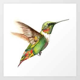 Hummingbird Magic Art Print