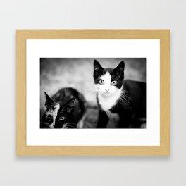 kittys Framed Art Print
