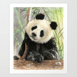 China Bear Art Print