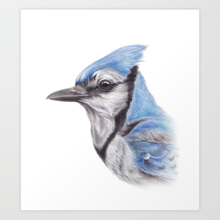 Painting Blue Jay Art