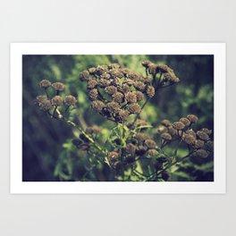 The Brown Flower Art Print