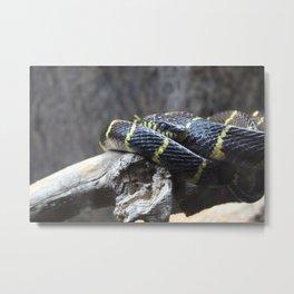 Mangrove Snake Metal Print