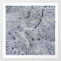 Snowy Branches by dava_s