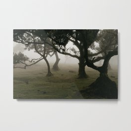 Madeia Fanal Forest in Fog Metal Print