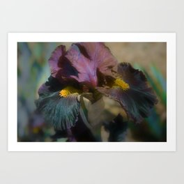 velvet iris Art Print