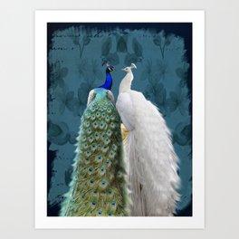 White Peacock and Blue Peacock Bird A732 Art Print