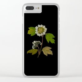 Viburnum Opulus Mary Delany Delicate Paper Flower Collage Black Background Floral Botanical Clear iPhone Case