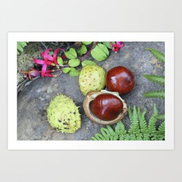 Conkers -horse chestnuts Art Print