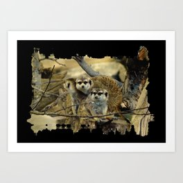 African Meerkat Trio Art Print
