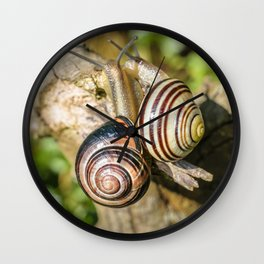 Two Grove Small Striped Snail / Snails Wall Clock