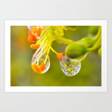 In the Glow of the Afternoon Shower Art Print
