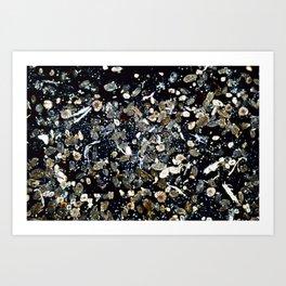Foraminifera from Mediterranean Art Print