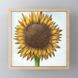 The Colored Pencil Sunflower Drawing Framed Mini Art Print