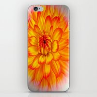 dahlia iPhone & iPod Skins featuring Dahlia by Art-Motiva