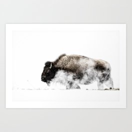 Bison Yellowstone Winter Art Print