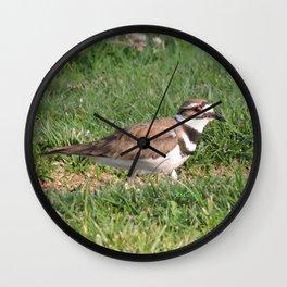 Killdeer Browsing Wall Clock