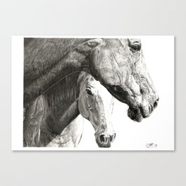Equines Canvas Print