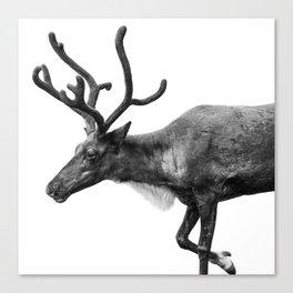 Animal Photography | Reindeer Minimalism | Antlers Christmas | Rudolf Canvas Print