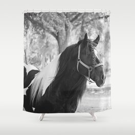 Stunning Gypsy Vanner Shower Curtain