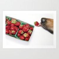 Dog with Strawberries Art Print