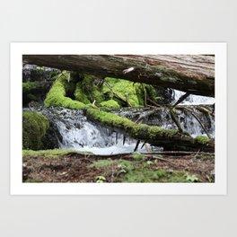 Cascades 646 Pacific Northwest Waterfall Art Print