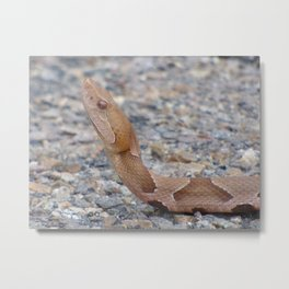 copperhead 2015 II Metal Print