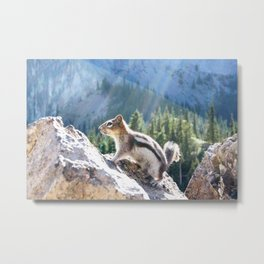 Majestic Squirrel Metal Print