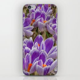 Striped Purple Crocuses Manipulated iPhone Skin