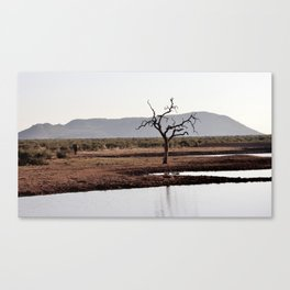 The lonely Tree & Elephant Canvas Print