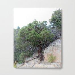 Ironwood Tree of Arizona Metal Print