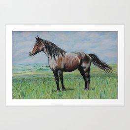 Snowy The Nokota Horse Art Print