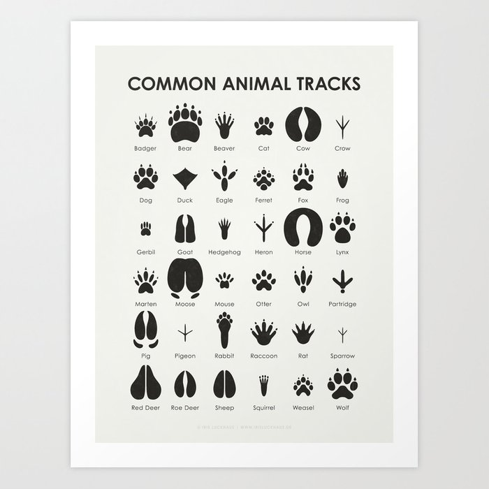 Common Animal Tracks Kunstdrucke