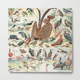 Wild Birds // Oiseaux by Adolphe Millot XL 19th Century Science Textbook Diagram Artwork Metal Print