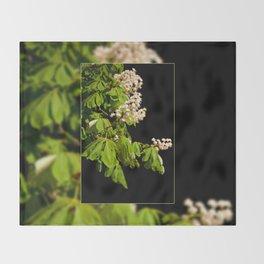 blooming Aesculus tree on black Throw Blanket