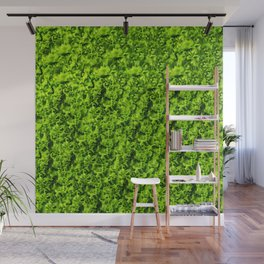 Green salad leaves Wall Mural