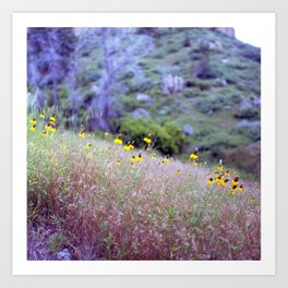 montana yellow Art Print