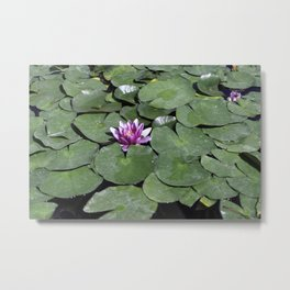 Calm Lotus Metal Print
