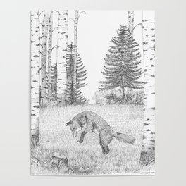 Mousing around - red fox Poster