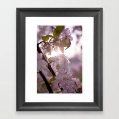 Sunlit peak Framed Art Print