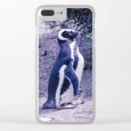 Magellanic Penguin in Peninsula Valdes - Argentina Clear iPhone Case