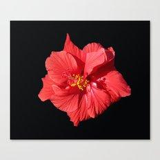 Red Hibicus DPG150523 Canvas Print