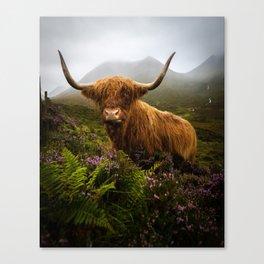 Scottish Highlands Cow Canvas Print