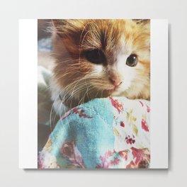 Sweet Kitten Metal Print
