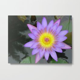 purple water lilly Metal Print